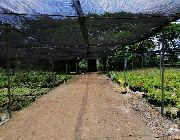baliuag lot for sale, lot for sale in baliuag, bulacan lot for sale -- Land & Farm -- Bulacan City, Philippines