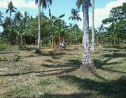 FARM AND LAND FOR SALE -- Land & Farm -- Laguna, Philippines
